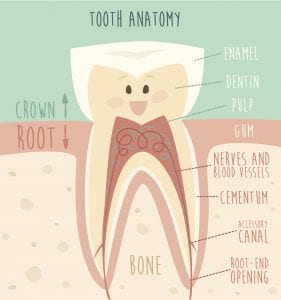 Root Canal Thornton